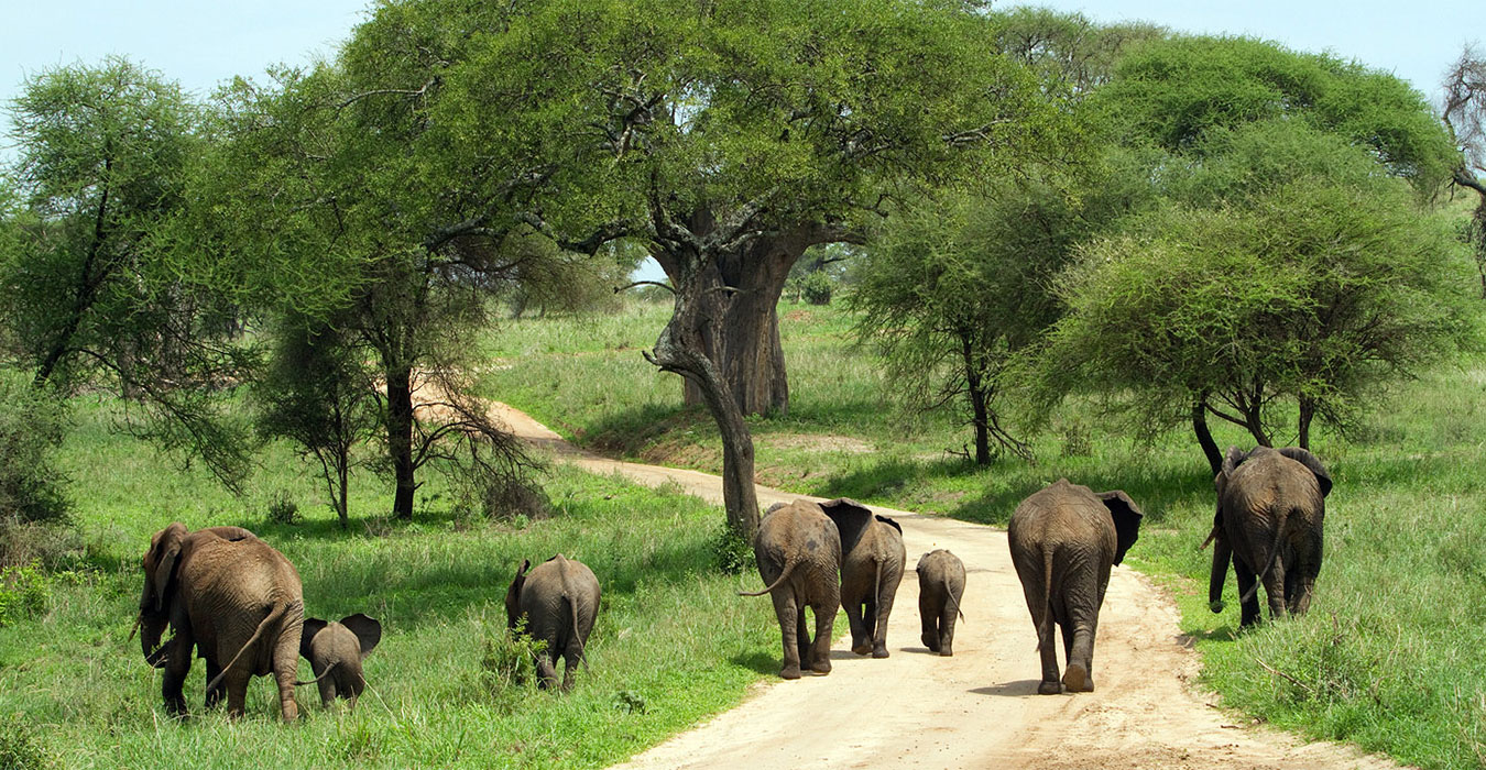 Tarangire national park ROATS